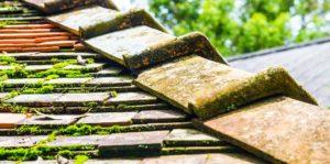 demoussage toiture prix